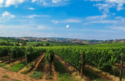 tuscany wineries