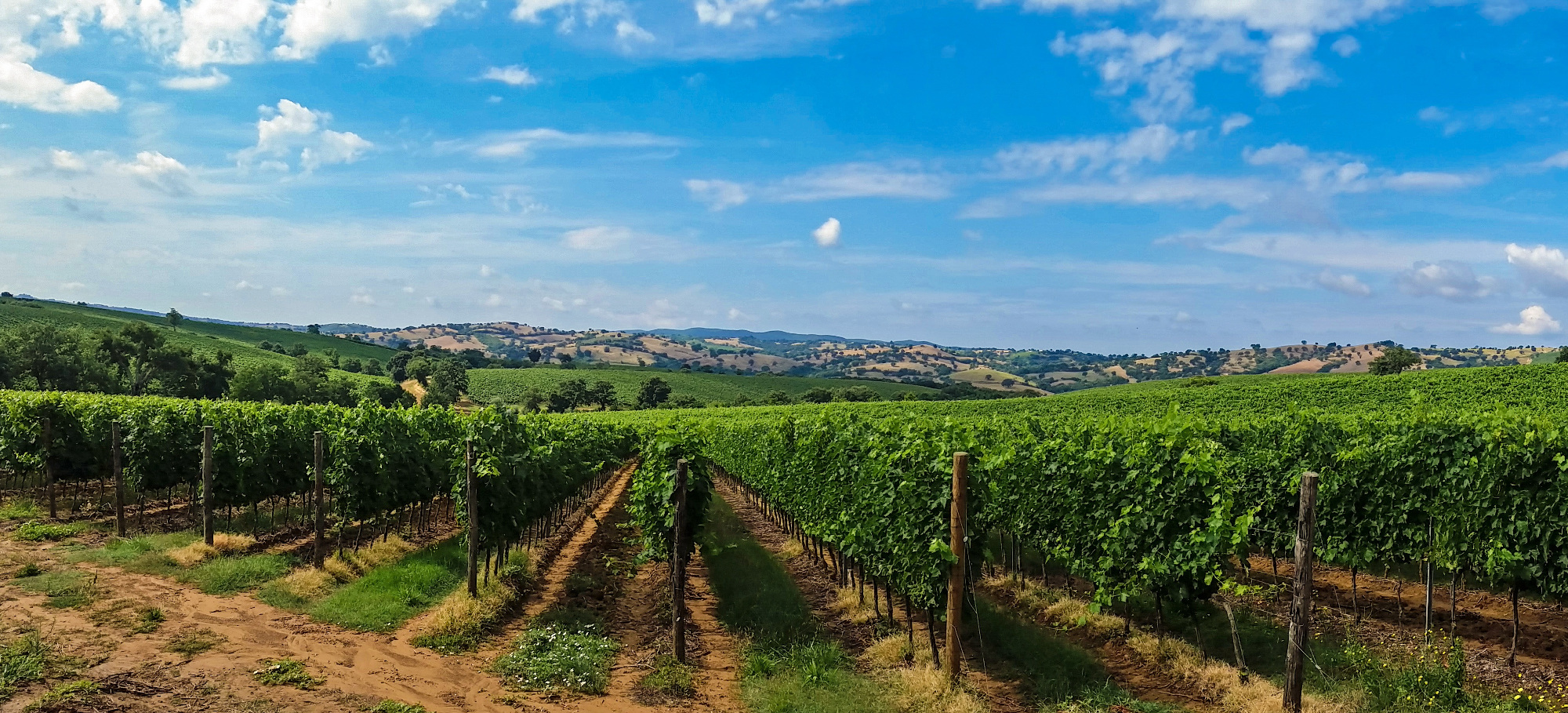 Four days Tuscan Private Wine tour - Tuscany in Tour